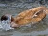lykke-er-nyt-vand-at-bade-i-2015-04-12-2.jpg