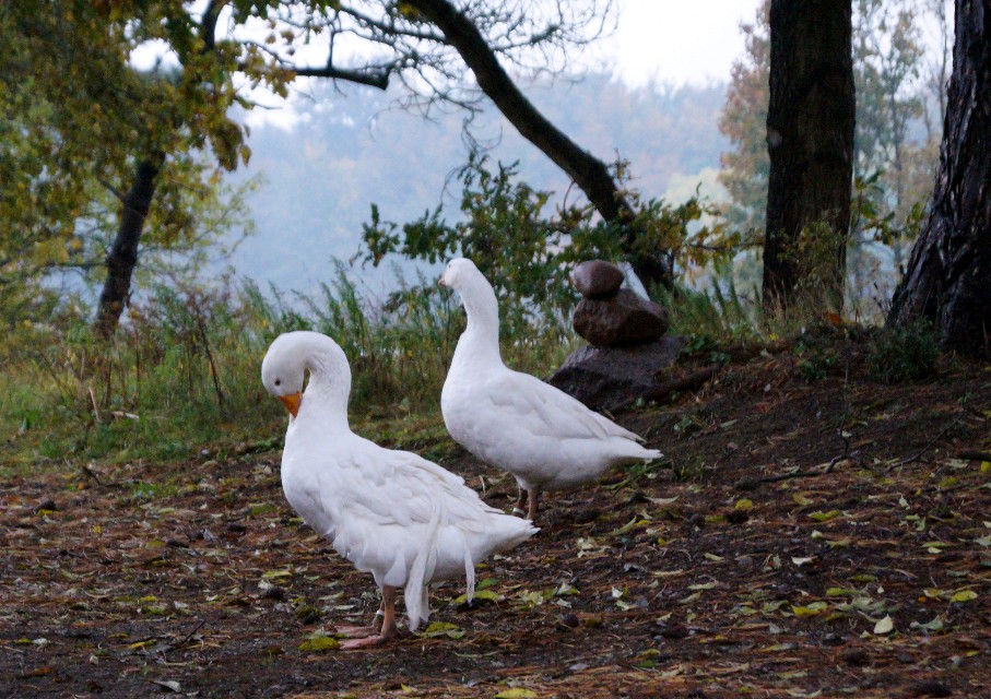 hatched-20-05-2015-five-months-2015-10-18-1