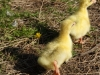 hatched-20-05-2015-two-days-2015-05-22-6.jpg